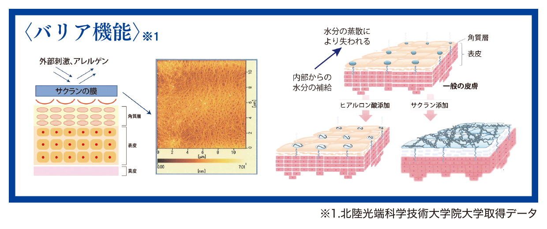 バリア機能(図)